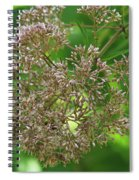Bees On Joe-pyed Weed Spiral Notebook