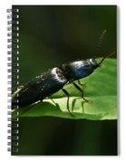 Beetle At Sunrise Spiral Notebook
