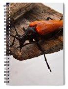 Beetle Pondering Spiral Notebook
