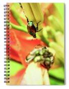 Beetles Spiral Notebook