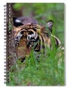 Behind A Tree Spiral Notebook