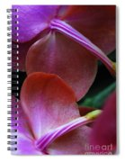 Behind The Orchids Spiral Notebook