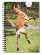 Belgian Shepherd Dog Spiral Notebook