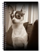 Bella Dulce Spiral Notebook