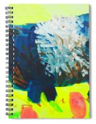 Belted Galloway Cow Looking At You Spiral Notebook