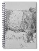 Belted Galloway Cow Pencil Drawing Spiral Notebook