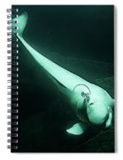 Beluga Whale 3 Spiral Notebook