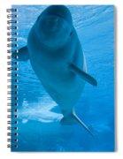 Beluga Whale In A Marine Park, Ontario Spiral Notebook
