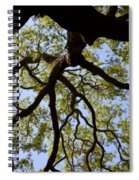 Beneath The Oak Spiral Notebook