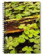 Beneath The Redwoods Spiral Notebook