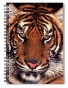 Bengal Tiger - 2 Spiral Notebook