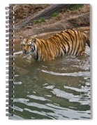 Bengal Tiger Wading Stream Spiral Notebook