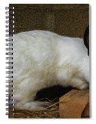 Benny Bunny Spiral Notebook
