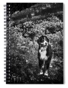 Bernese Mountain Dog Black And White Spiral Notebook