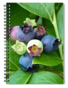 Berries Beautiful Spiral Notebook