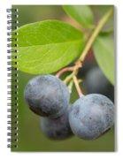 Berrydelicious Spiral Notebook