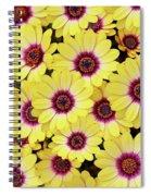 Better Is Beautiful Spiral Notebook