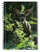 Beverly Hills Deer Spiral Notebook