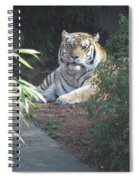 Beyond The Branches Spiral Notebook