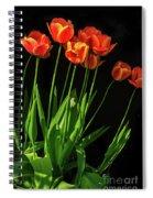 Bicolor Tulips Spiral Notebook