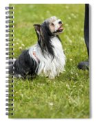 Biewer Yorkshire Terrier Is Looking Up At His Master Spiral Notebook