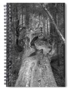 Big Basin 2 Spiral Notebook