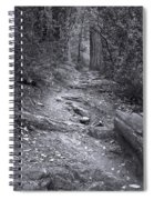 Big Basin Redwoods Sp 1 Spiral Notebook