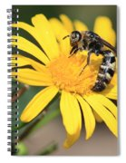 Big Bee On Yellow Daisy Spiral Notebook