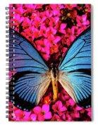 Big Blue Butterfly On Kalanchoe Flowers Spiral Notebook