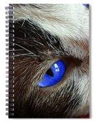 Big Blue Eyes Cat Spiral Notebook