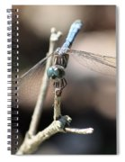 Big Bug Eyes Spiral Notebook