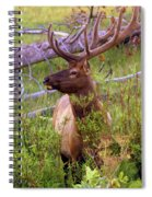 Big Bull Spiral Notebook