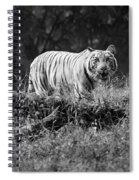 Big Cat In The Woods Spiral Notebook