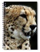 Big Cats 101 Spiral Notebook
