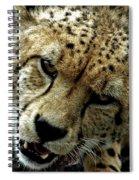 Big Cats 50 Spiral Notebook