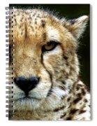 Big Cats 51 Spiral Notebook
