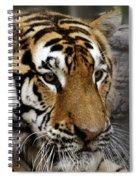 Big Cats 78 Spiral Notebook