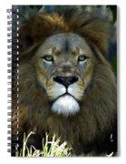 Big Cats 79 Spiral Notebook