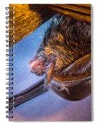 Big Eared Bat At Sunrise Spiral Notebook