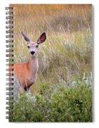 Big Ears Spiral Notebook