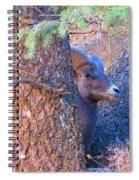 Big Eye Ram Spiral Notebook