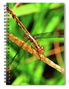 Big Eyed Dragonfly Spiral Notebook