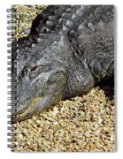 Big Gator Spiral Notebook