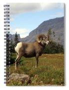 Big Horn 4   Spiral Notebook