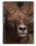 Big Horn Grazing Spiral Notebook