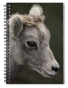 Big Horn Lamb Spiral Notebook