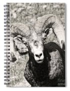 Big Horn Ram Bandw 5 Spiral Notebook