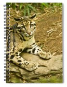 Big Kitty Cat Spiral Notebook
