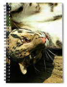 Big Kitty Fun Spiral Notebook