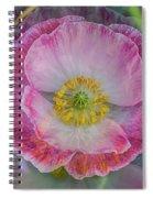 Big Poppy 4 Spiral Notebook